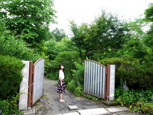 8月・9月の植物(2017.06.01) | 軽井沢町植物園
