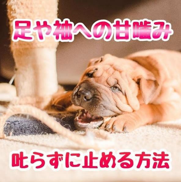 噛ま れ たら 犬 に